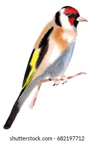 Watercolor illustration of a bird goldfinch