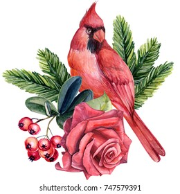 watercolor illustration  bird red cardinal, red rose, berries, spruce branches.