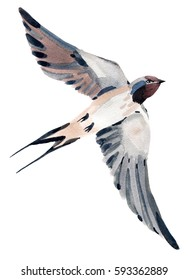 Watercolor illustration of a bird swallow