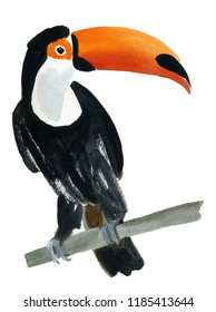 Watercolor illustration of a bird toucan