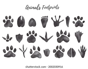 Watercolor illustration of black animal and bird trails - bear, wolf, chicken, moose, duck Paw prints