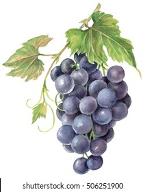 Watercolor illustration Black grapes isolated in white