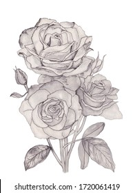 Watercolor illustration of black. white and grey bouquet of rose