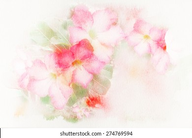 Watercolor illustration of blossom pink flower (Desert Rose; Impala Lily; Mock Azalea). Artistic floral abstract background.