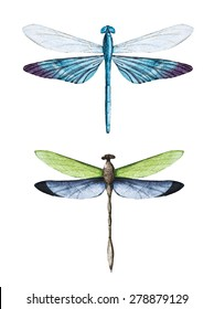 watercolor illustration with blue dragonflies