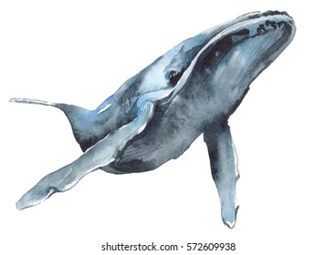 watercolor illustration of a blue whale on a white background