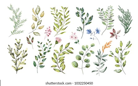 Watercolor illustration.  Botanical collection. Set of wild and garden herbs. Flowers, leaves, branches and other natural elements.