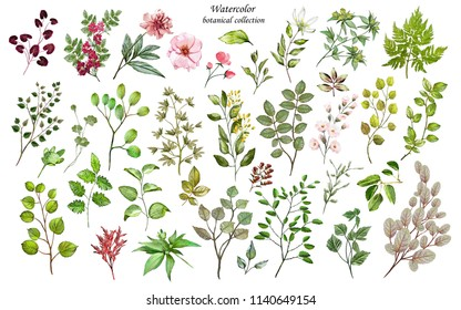 Watercolor illustration. Botanical collection of wild and garden plants. Set: leaves flowers, branches, herbs and other natural elements. All drawings isolated on white background.