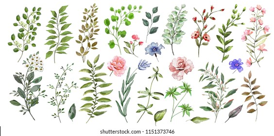 Watercolor illustration. Botanical collection of wild and garden plants. Set: leaves of flowers, branches, herbs and other natural elements. All drawings isolated on white background.