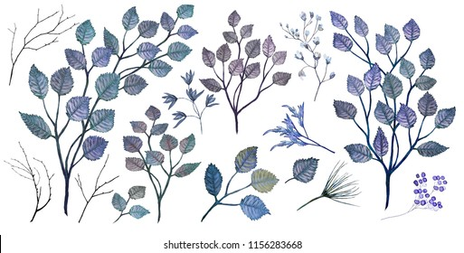 Watercolor illustration. Botanical collection of wild and garden plants. Set of blue leaves, twigs, herbs and other natural elements.