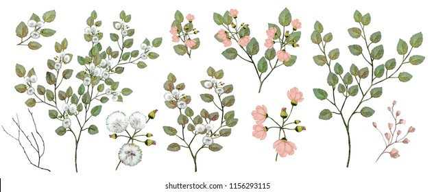 Watercolor illustration. Botanical collection of wild and garden plants. Set: leaves, flowers, branches, herbs and other natural elements. Pink flowers.