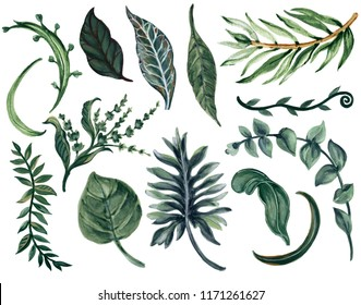 Watercolor illustration Botanical leaves collection Set of wild and garden and abstract  leaves elements hand painted