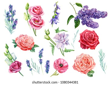 watercolor illustration, botanical painting, set of flowers lilac, bells, eustoma, lisianthus, ranunculus, rose, lavender, hand drawing