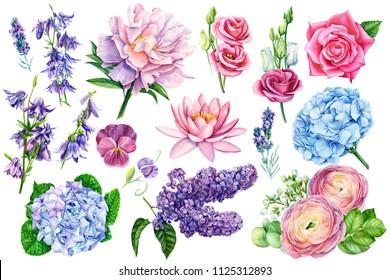 watercolor illustration, bouquet of flowers, blue hydrangeas, rose, anemone, pansies, eucalyptus leaves, peony, lavender, bells, ranunculus,  eustoma, lotus
