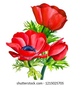 watercolor illustration, bouquet of flowers, red anemone on an isolated white background. botanical painting, hand drawing,