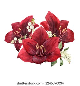 Watercolor illustration, a bouquet of red flower amaryllis and snowberry, Christmas flowers