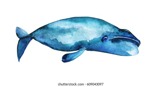Watercolor illustration of Bowhead whale.