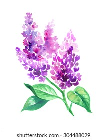 watercolor illustration, branch with lilac flowers and green leaves, isolated design element