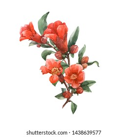 Watercolor illustration of a branch with pomegranate flowers