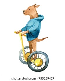Watercolor illustration. Brown dog in a jacket go by gyroscooter