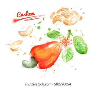 Watercolor illustration of cashew, peeled nuts and unpeeled fruit with paint smudges and splashes.