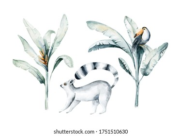 Watercolor illustration of a cat lemur in white background.