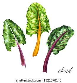 Chard Drawing Hd Stock Images Shutterstock