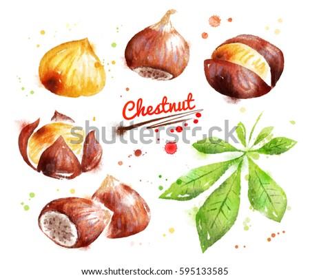 Watercolor Illustration Chestnut Peeled Unpeeled Paint