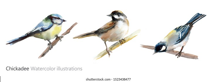 Watercolor illustration of a chickadee. Little bird on a branch.