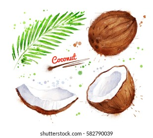 Watercolor illustration of coconut, whole, half and piece with paint smudges and splashes.