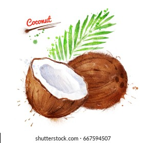 Watercolor illustration of coconut, whole and half with paint smudges and splashes.