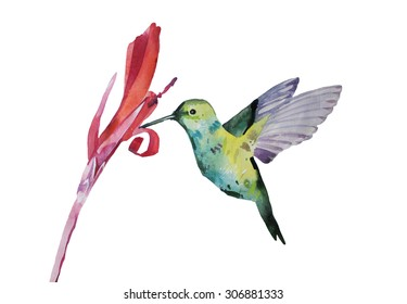 watercolor illustration, colibri, hand painted isolated on white background