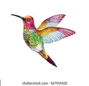 Watercolor Illustration of colorful hummingbird - colibri