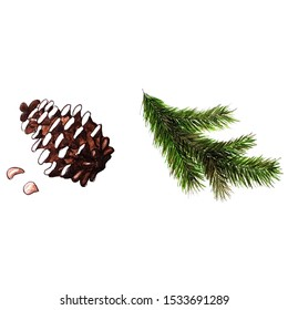 Watercolor illustration of cones and Christmas tree branch