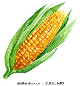 watercolor illustration, corn vegetables, on isolated white background, autumn collection