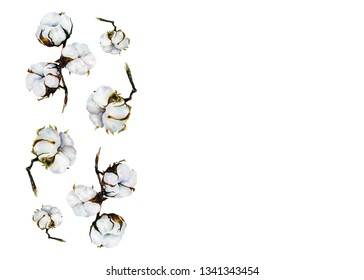 watercolor illustration of cotton flowers, a branch of cotton flowers, cotton flowers on a white background, watercolor flowers, a cotton sprig, illustration