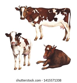 Watercolor illustration. Cows isolated on white background