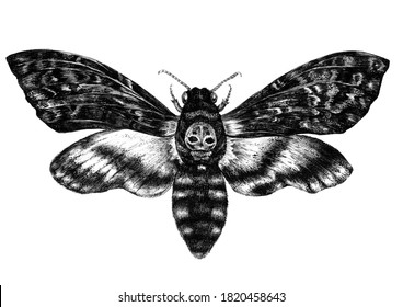 Watercolor Illustration of Death's-head Hawkmoth Butterfly Isolated on White. Detailed Tattoo Sketch of Acherontia Insect with Skull in Vintage Style. Gothic, Wedding, Halloween Hand Drawn Decoration.