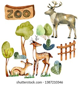 Watercolor illustration of deers at the zoo, isolated scene hand drawn on a white background