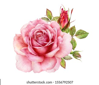 Watercolor illustration of a delicate pink rose with decorative twigs, bud and leaves. Botanical illustration.