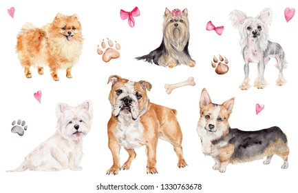 Watercolor illustration with different breeds of dogs - english bulldog, welsh corgi pembroke, west highland white terrier, chinese crested dog, yorkshire terrier, pomeranian, and with elements - dog.