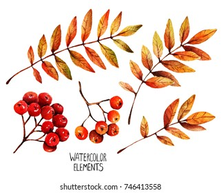 Watercolor illustration. Different elements for Autumn design, leaves and berries of mountain ash,set