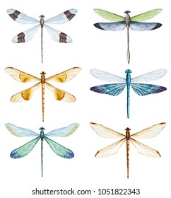 watercolor illustration of a dragonfly, set of isolated insects