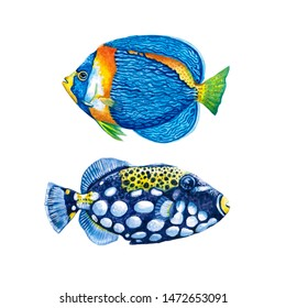 Watercolor illustration of a fish.