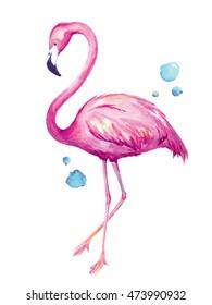Watercolor illustration of flamingo