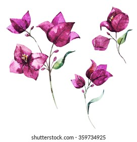 watercolor illustration of flower bougainvillea, pink flower, isolated object