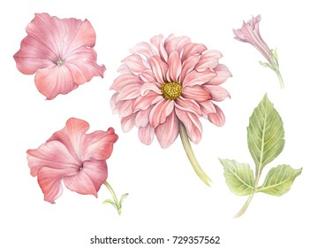 Watercolor illustration flower set in white background. Dahlia and petunia. Design elements.