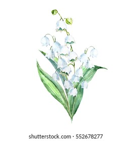 Watercolor illustration of flowers lily of the valley.  sweet spring bouquet