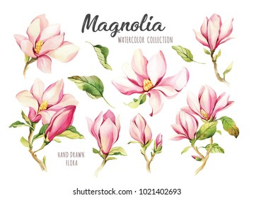 Watercolor illustration of a with flowers pink Magnolias. Hand drawn isolated close up tree floral. Botanical flowers elements for your design.
