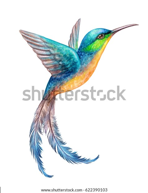 watercolor illustration, flying hummingbird isolated on white background, exotic, tropical, wild life clip art